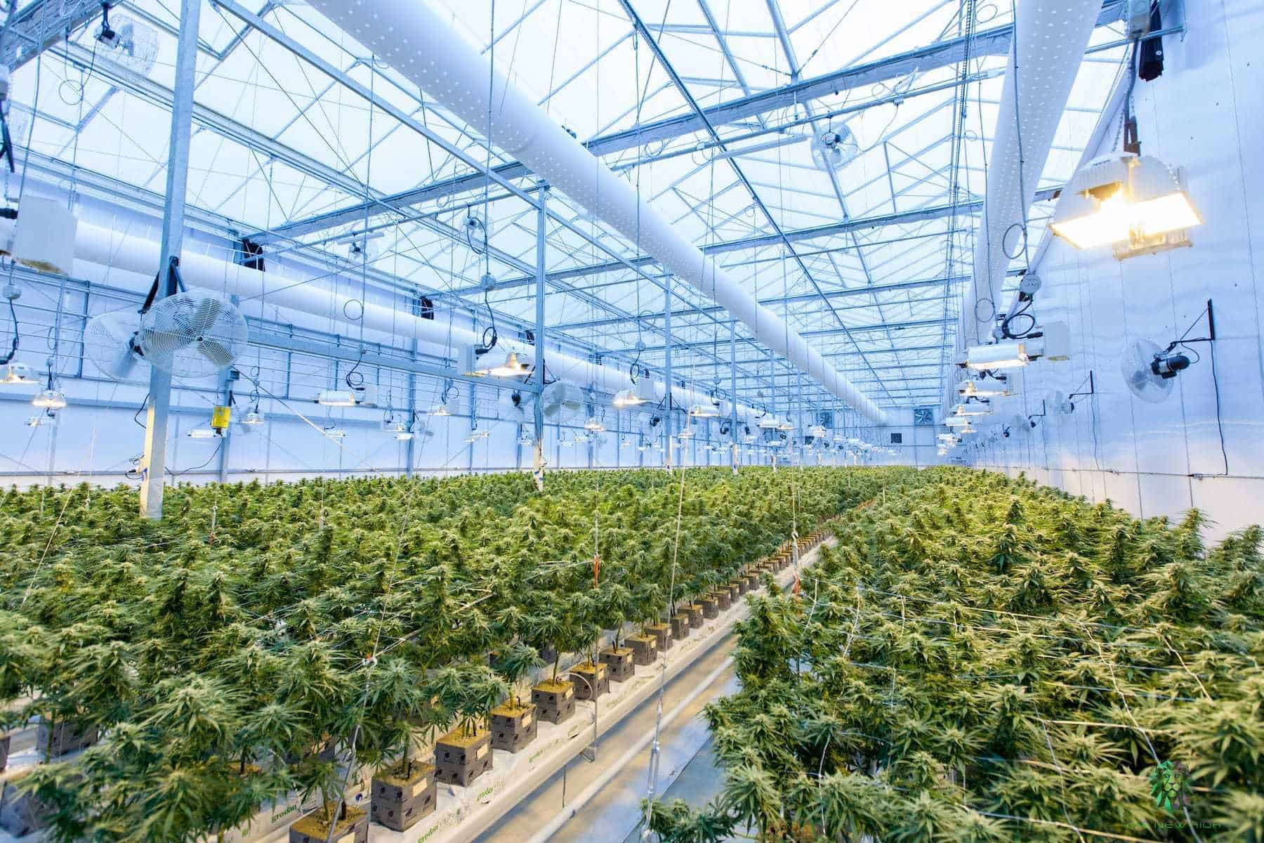 Cannabis Industry Business Opportunities 2021